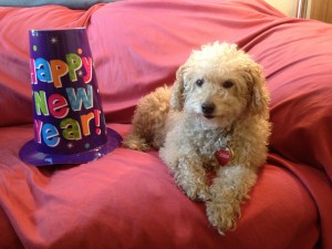 Tucker Happy New Year